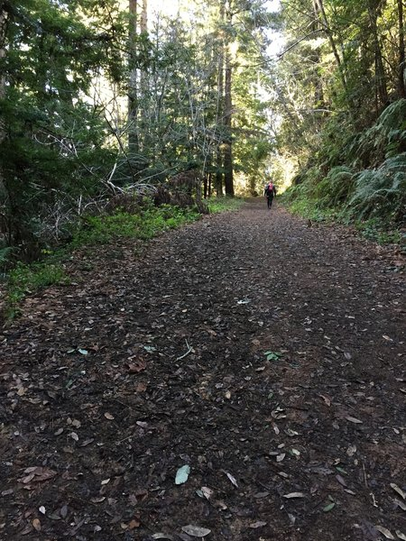It's a smooth ascent to the parking area along the Purisima Creek Trail.