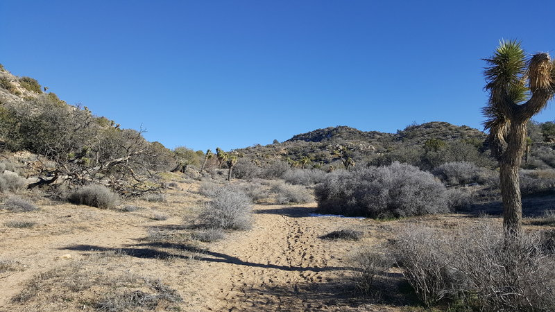 Expect great views further in along this trail. While it's mostly sand throughout, some areas are loose and others are more hardpack.