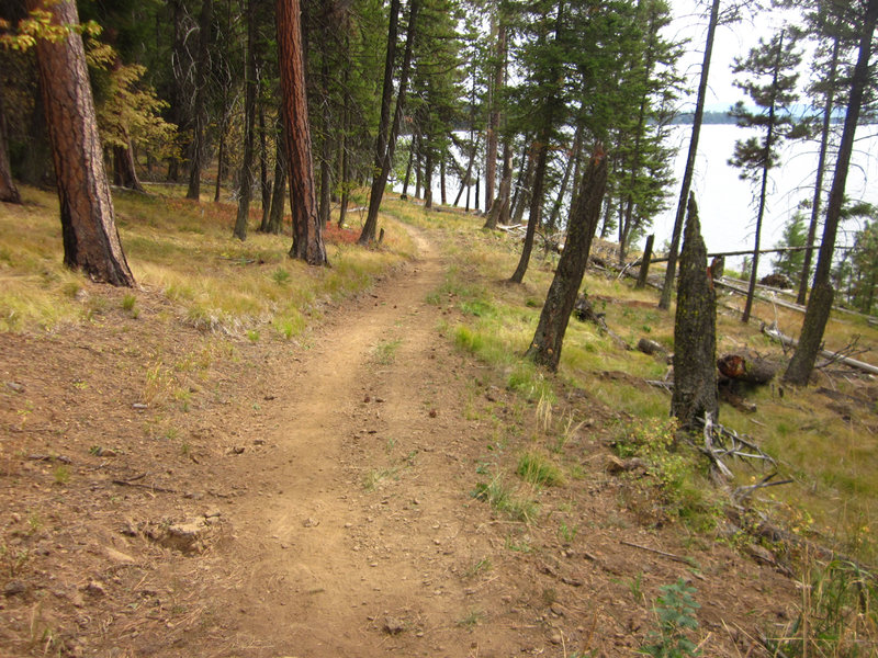 The Huckleberry Trail meanders through pine forests as it makes its way down to Payette Lake.