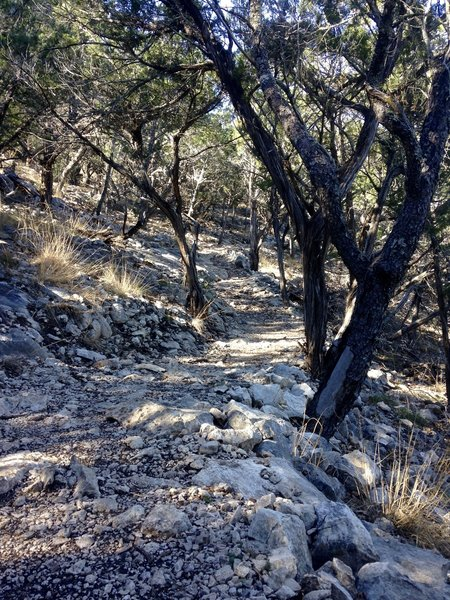 The terrain through which the Camp Eagle - Zip Trail passes is rocky and warrants watching where you place your feet.