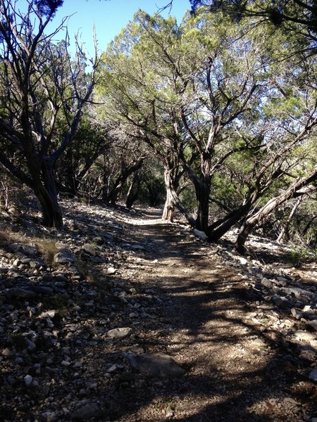 The mid-section of Upper Wagon Trail is smoother than others.