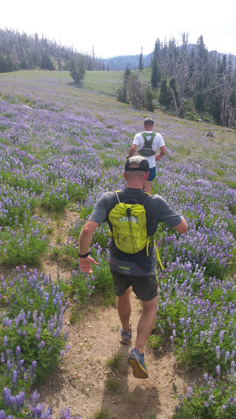 Our group runs through fields of lupine in Payette National Forest.
