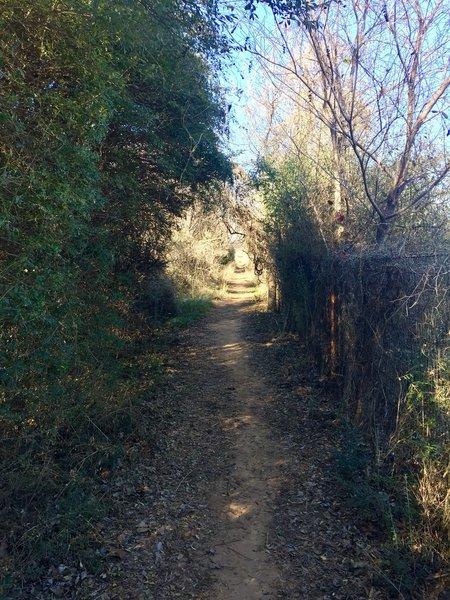 The Prairie Trail follows along the fence line of the prairie dog town.