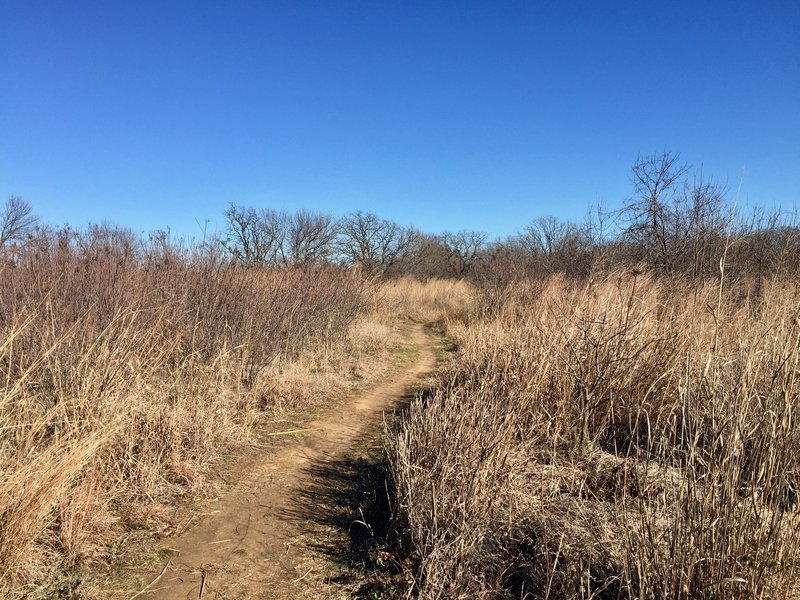 The Prairie Trail winds through the grassland like a corn maze.