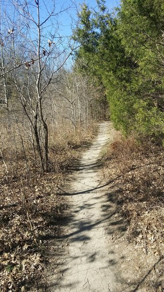 The singletrack trail travels next to the creek.