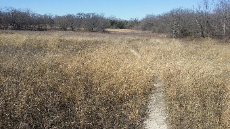 Wildflower Meadow ripples like the sea in the wind.