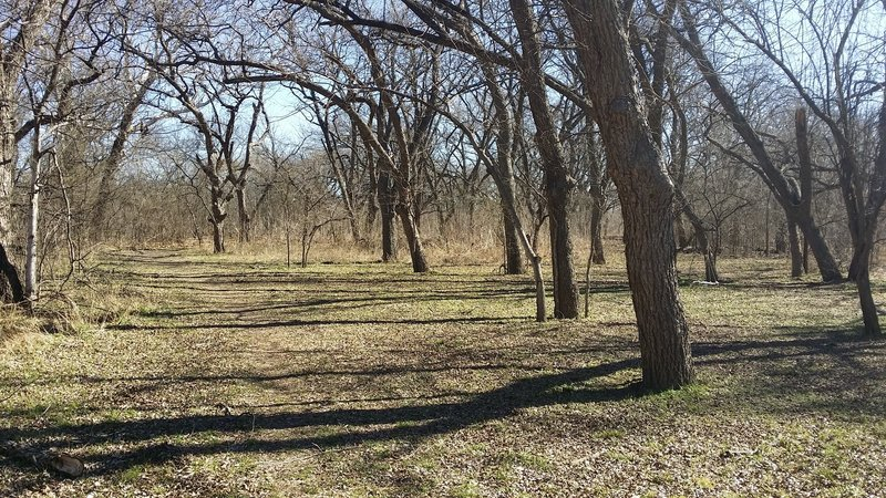 An old-growth pecan stand lives in the meadow.