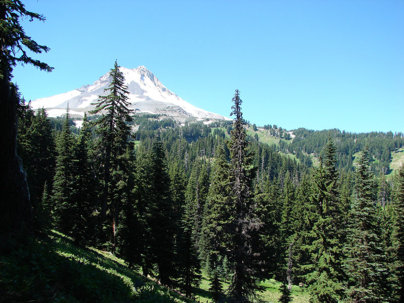 Mt. Hood can be seen from some openings on the Umbrella Falls Trail. Photo by Yunkette.