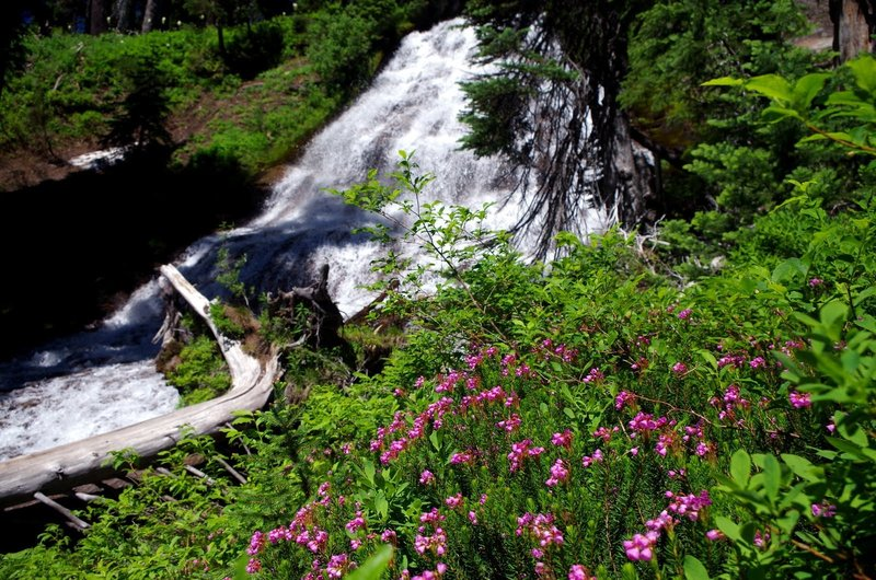 Heather blooms at Umbrella Falls. Photo by Gene Blick.