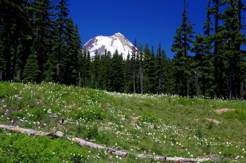 Mt. Hood and bountiful wildflowers serve as your companions on the Umbrella Falls Trail. Photo by Gene Blick.