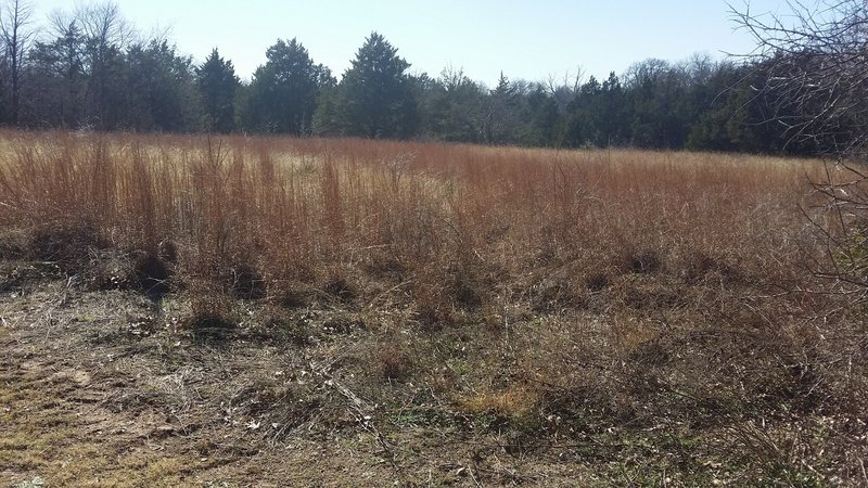 Enjoy this small meadow along the trail.