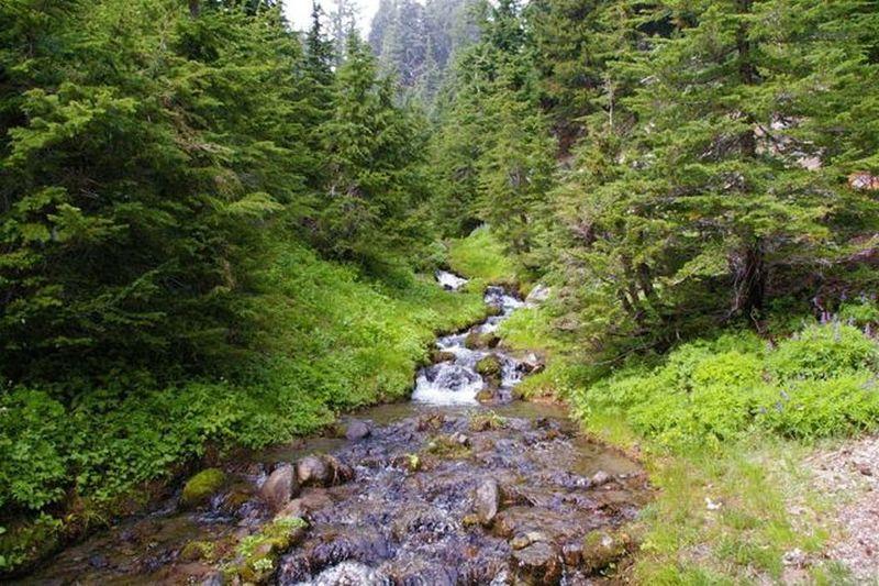 Cross Mitchell Creek on the Umbrella Falls Trail. Photo by John Sparks.