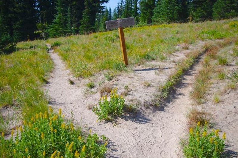This is the Umbrella Falls Trail junction with the Timberline Trail. Photo by John Sparks.