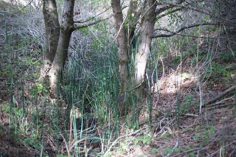 Cane grows in this wooded ravine, where water provides nourishment for the trees and plants.