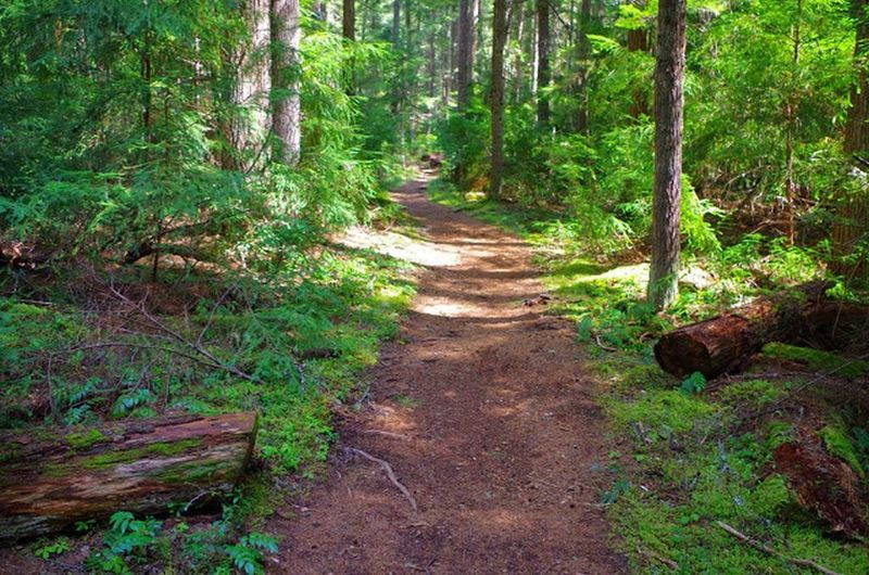 The Timothy Lake Trail heads through dense forests on its way toward Meditation Point. Photo by Gene Blick.