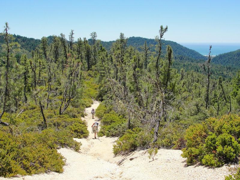 Hikers climb a sunny, sandy ridge on the McCrary Ridge Trail.