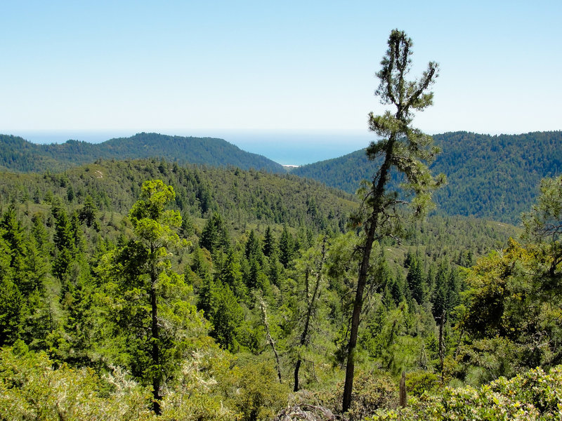 The Howard King Trail offers gorgeous views looking out to the Pacific Ocean over Big Basin's lush forests.