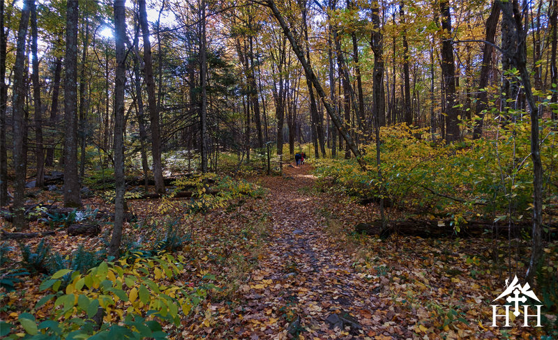 The trail to the table rocks is often covered in leaves.
