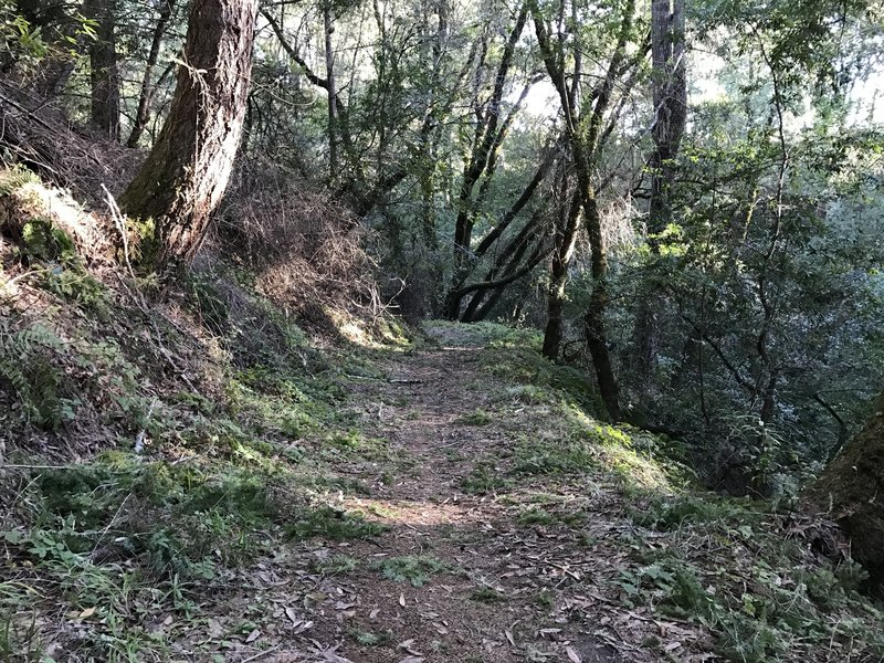 The Charquin Trail passes through the woods as it approaches the Mindego Hill Trail. Tree limbs can be found on the side of the trail, especially after storms.