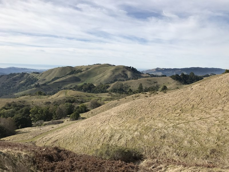 The hills surrounding the Russian Ridge Preserve, and the Pacific Ocean, can be seen off in the distance.