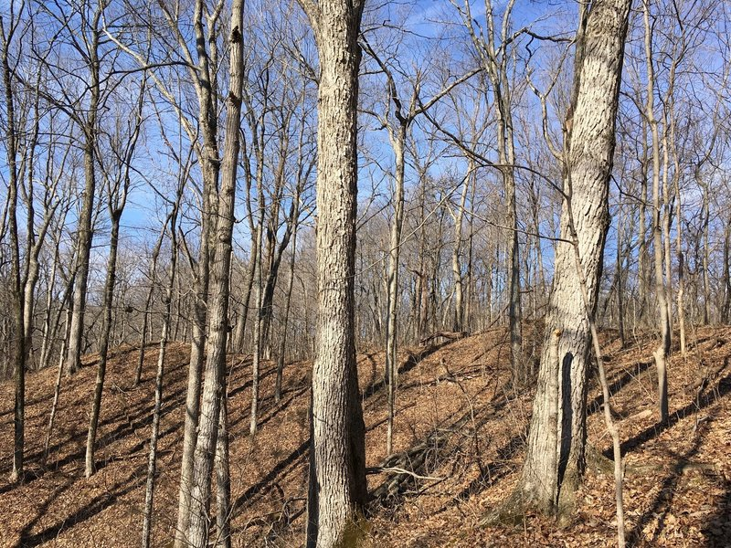 Experience Hopewell Indian earthworks in Twin Creek Metro Park.