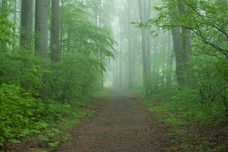 Morning fog rolls across the McDade Recreational Trail.