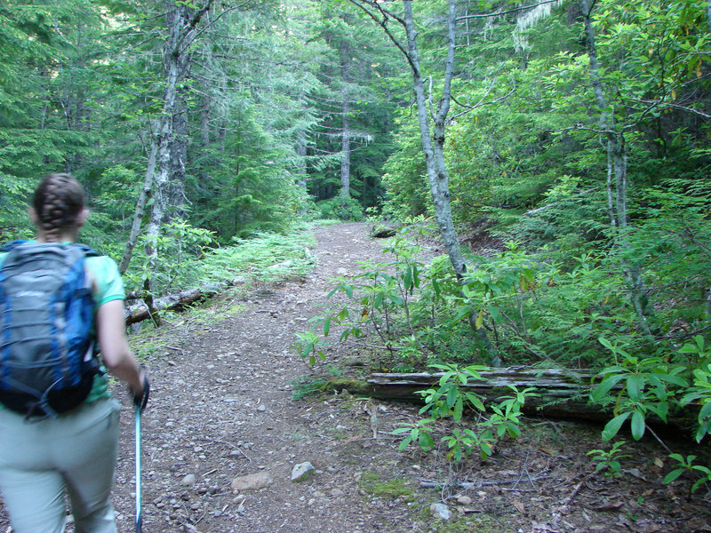 The first part of the Burnt Lake Trail was once a road up to Devil's Meadow. Photo by Yunkette.