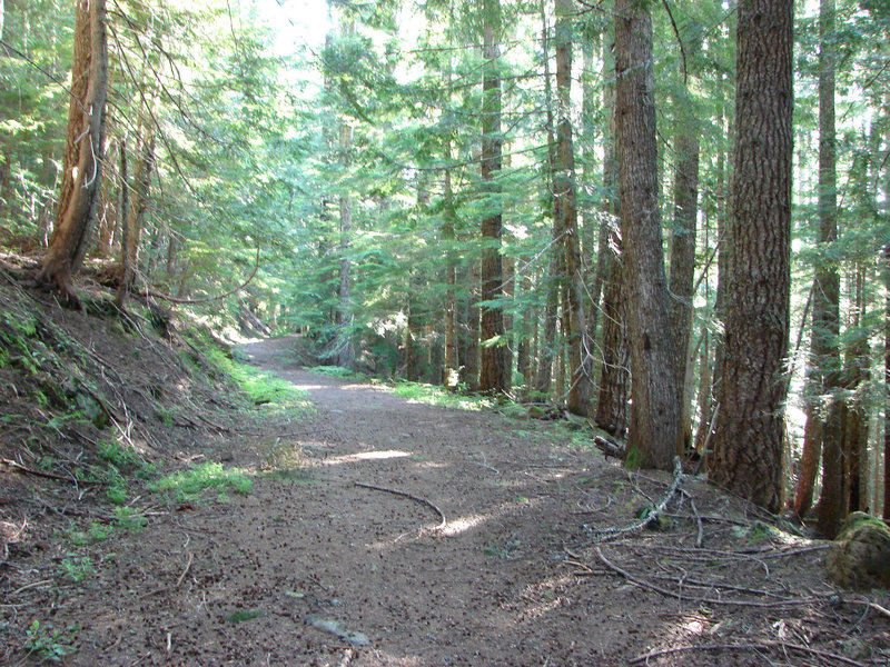 The old road was often used by local Native American tribes for huckleberry picking. Photo by Yunkette.