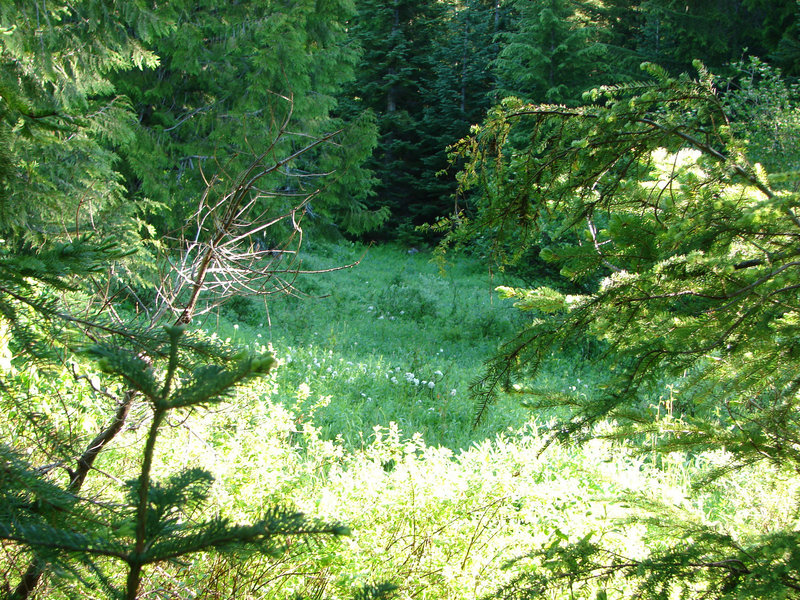 Devil's Meadow, a popular spot for huckleberry picking, is gradually being taken over by forest. Photo by Yunkette.