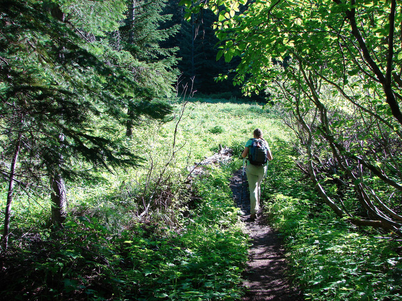 Hiking in Devil's Meadow rewards visitors with verdant surroundings. Photo by Yunkette.