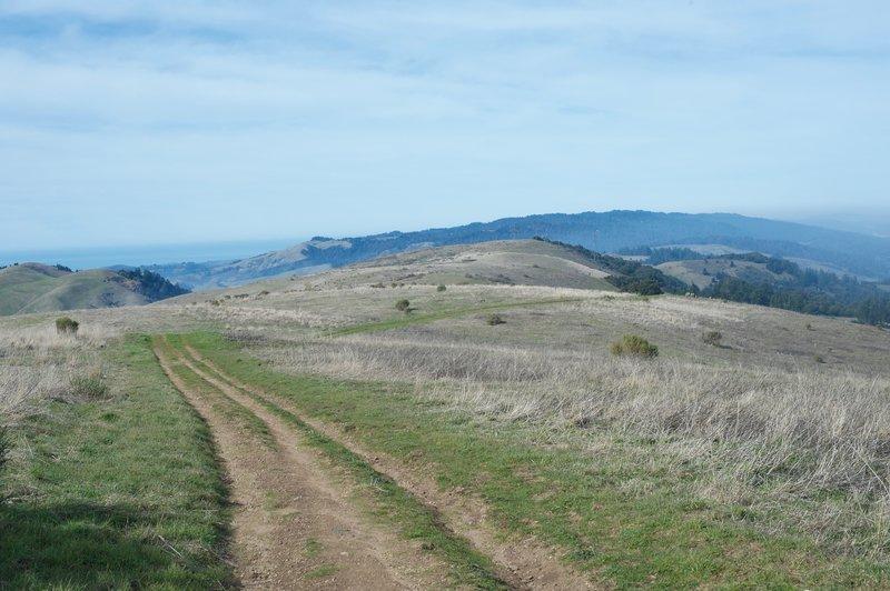 The Borel Hill Trail descends along a worn-out fire road through Russian Ridge Open Space Preserve.