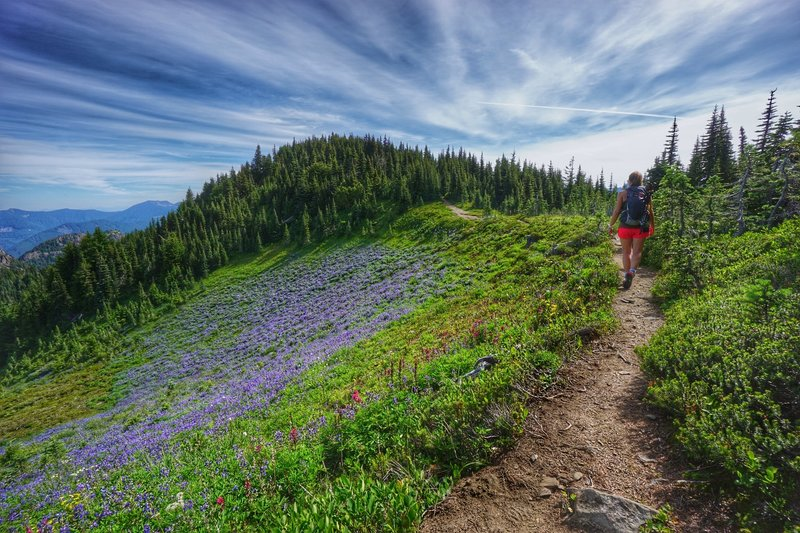 Experience wildflower scents for days along the Tolmie Peak Trail.