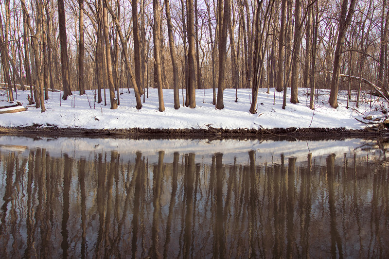 Trees reflect across the Rouge River.