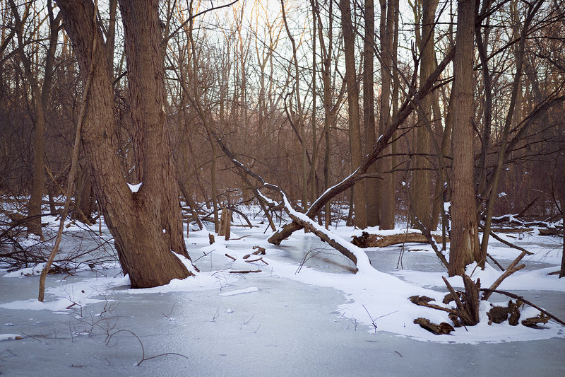 A frozen swamp provides nice scenery along the Center Cut Trail in winter.