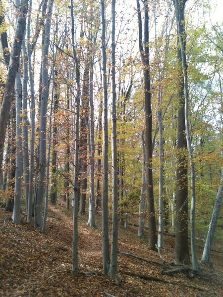 This is typical scenery along the trails in Middle Run Valley Park.