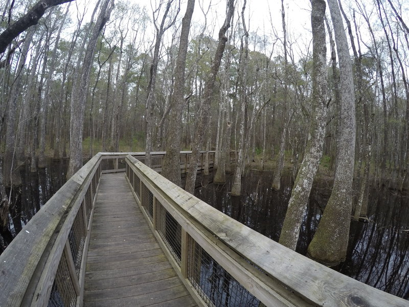 A boardwalk eases your passage through the swamp.