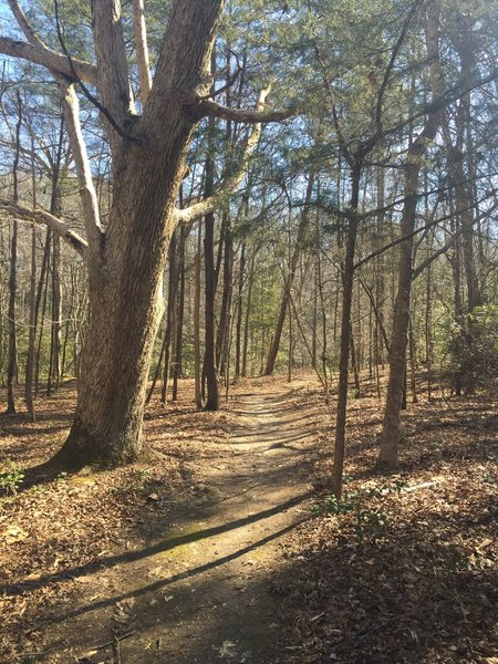 The short-but-sweet Beaver Trail offers beautiful forested views.