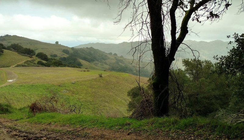 The Wood Road Trail meanders through the Quicksilver Hills with the Santa Cruz Mountains in the distance.