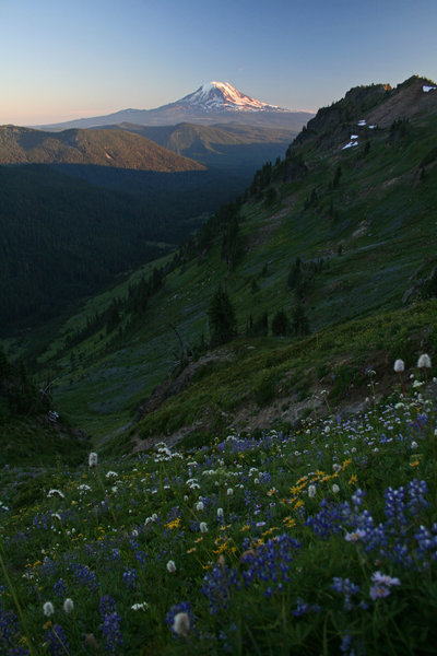 The Goat Rocks don't disappoint - fields of flowers and Mt. Adams pose at sunset.