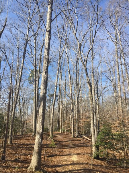 The Whitetail Trail heads out to the end following tall deciduous trees.