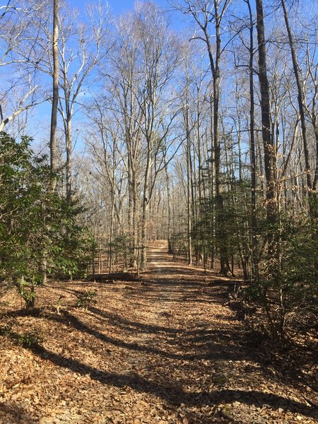 At times, the trail narrows to singletrack on the Riverview Trail.