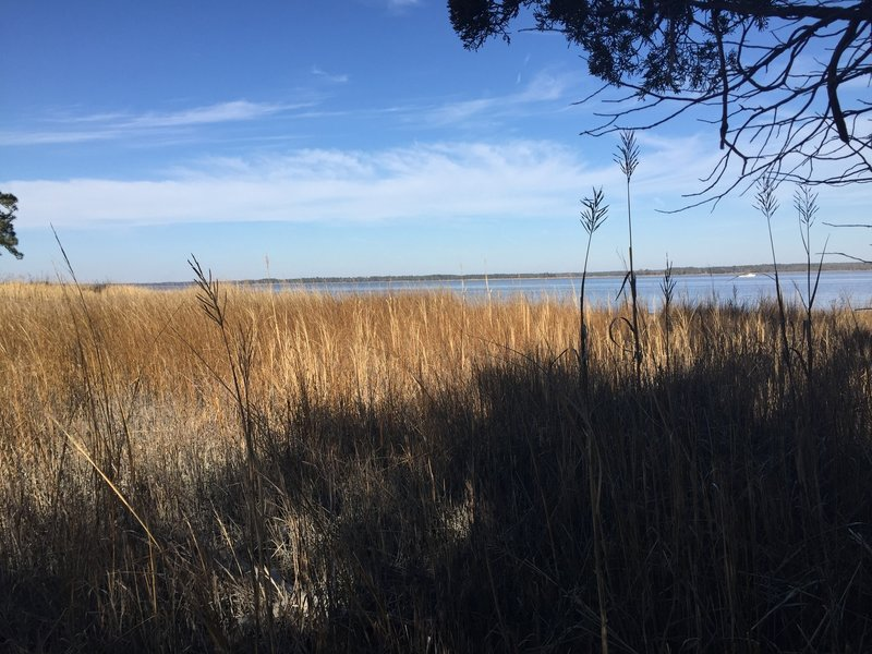 Enjoy nice views of the tidal marsh and York River at the end of the Powhatan Forks Trail North Fork.