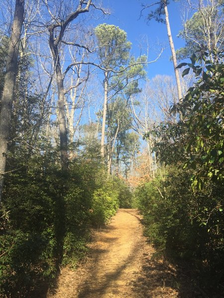 The Powhatan Forks Trail North Fork provides a smooth tread as it traverses the forest.