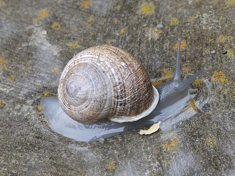 Little Shaw Valley is home to many creatures, including snails.