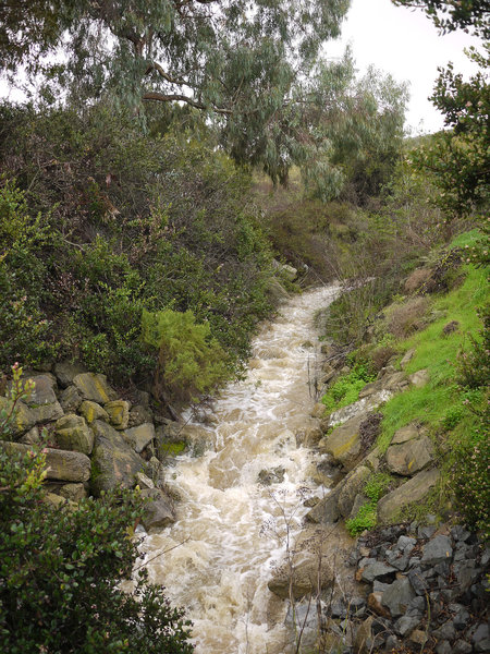 Little Shaw Valley's normally dry creek runs strongly after heavy rain.