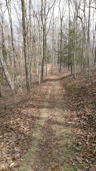 The crackle of leaves underfoot makes for a wonderful winter day on the Ridge Trail.
