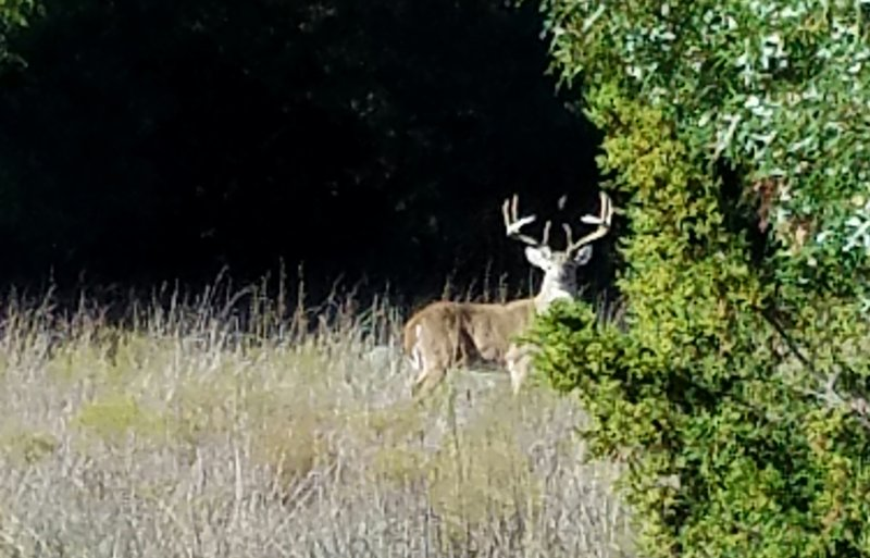This chance encounter happened along the Main Park Trail.