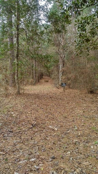 A side trail heads to the creek bluff.