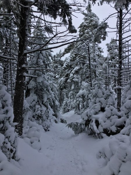Enjoy the Hunter Mountain Trail in wintertime to experience the majesty only a thick blanketing of snow can create.