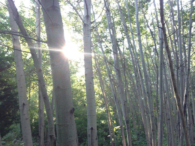 The sun filters through a beech grove at Hewen's Creek Park.
